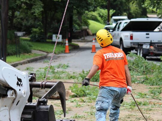 Arborist Consultations-Jackson Tree Trimming and Stump Grinding Services-We Offer Tree Trimming Services, Tree Removal, Tree Pruning, Tree Cutting, Residential and Commercial Tree Trimming Services, Storm Damage, Emergency Tree Removal, Land Clearing, Tree Companies, Tree Care Service, Stump Grinding, and we're the Best Tree Trimming Company Near You Guaranteed!