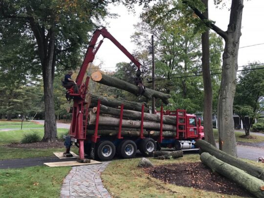 Commercial Tree Services-Jackson Tree Trimming and Stump Grinding Services-We Offer Tree Trimming Services, Tree Removal, Tree Pruning, Tree Cutting, Residential and Commercial Tree Trimming Services, Storm Damage, Emergency Tree Removal, Land Clearing, Tree Companies, Tree Care Service, Stump Grinding, and we're the Best Tree Trimming Company Near You Guaranteed!