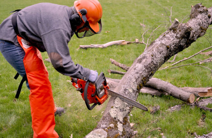 Emergency Tree Removal-Jackson Tree Trimming and Stump Grinding Services-We Offer Tree Trimming Services, Tree Removal, Tree Pruning, Tree Cutting, Residential and Commercial Tree Trimming Services, Storm Damage, Emergency Tree Removal, Land Clearing, Tree Companies, Tree Care Service, Stump Grinding, and we're the Best Tree Trimming Company Near You Guaranteed!