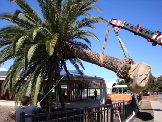 Palm Tree Removal-Jackson Tree Trimming and Stump Grinding Services-We Offer Tree Trimming Services, Tree Removal, Tree Pruning, Tree Cutting, Residential and Commercial Tree Trimming Services, Storm Damage, Emergency Tree Removal, Land Clearing, Tree Companies, Tree Care Service, Stump Grinding, and we're the Best Tree Trimming Company Near You Guaranteed!