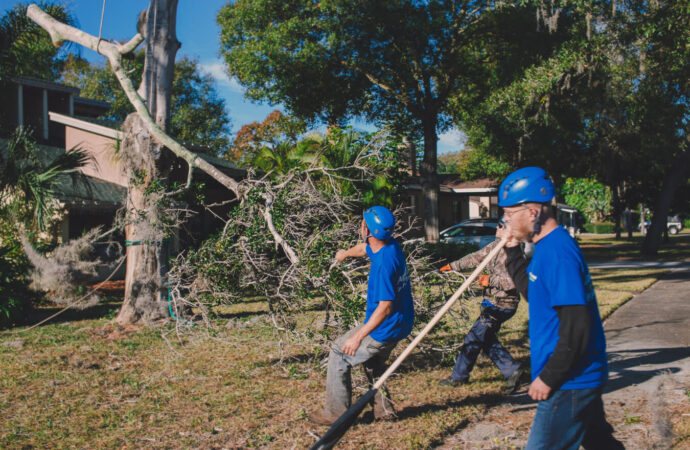 Residential Tree Services-Jackson Tree Trimming and Stump Grinding Services-We Offer Tree Trimming Services, Tree Removal, Tree Pruning, Tree Cutting, Residential and Commercial Tree Trimming Services, Storm Damage, Emergency Tree Removal, Land Clearing, Tree Companies, Tree Care Service, Stump Grinding, and we're the Best Tree Trimming Company Near You Guaranteed!
