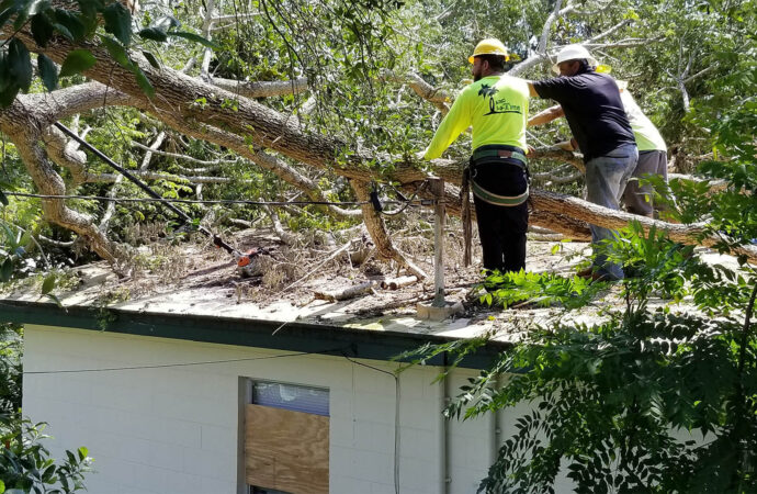 Storm Damage-Jackson Tree Trimming and Stump Grinding Services-We Offer Tree Trimming Services, Tree Removal, Tree Pruning, Tree Cutting, Residential and Commercial Tree Trimming Services, Storm Damage, Emergency Tree Removal, Land Clearing, Tree Companies, Tree Care Service, Stump Grinding, and we're the Best Tree Trimming Company Near You Guaranteed!