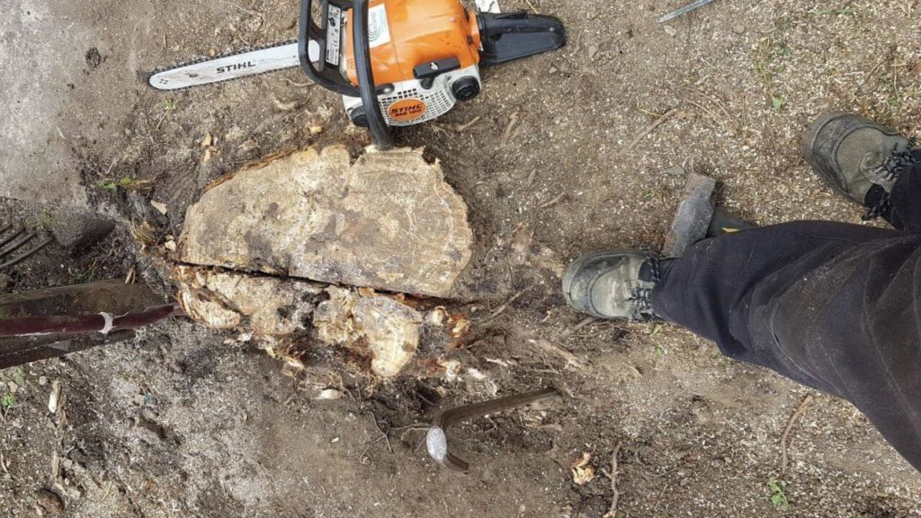 Stump Removal-Jackson Tree Trimming and Stump Grinding Services-We Offer Tree Trimming Services, Tree Removal, Tree Pruning, Tree Cutting, Residential and Commercial Tree Trimming Services, Storm Damage, Emergency Tree Removal, Land Clearing, Tree Companies, Tree Care Service, Stump Grinding, and we're the Best Tree Trimming Company Near You Guaranteed!