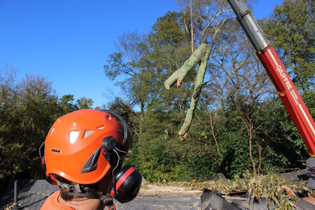 Tree Cutting-Jackson Tree Trimming and Stump Grinding Services-We Offer Tree Trimming Services, Tree Removal, Tree Pruning, Tree Cutting, Residential and Commercial Tree Trimming Services, Storm Damage, Emergency Tree Removal, Land Clearing, Tree Companies, Tree Care Service, Stump Grinding, and we're the Best Tree Trimming Company Near You Guaranteed!