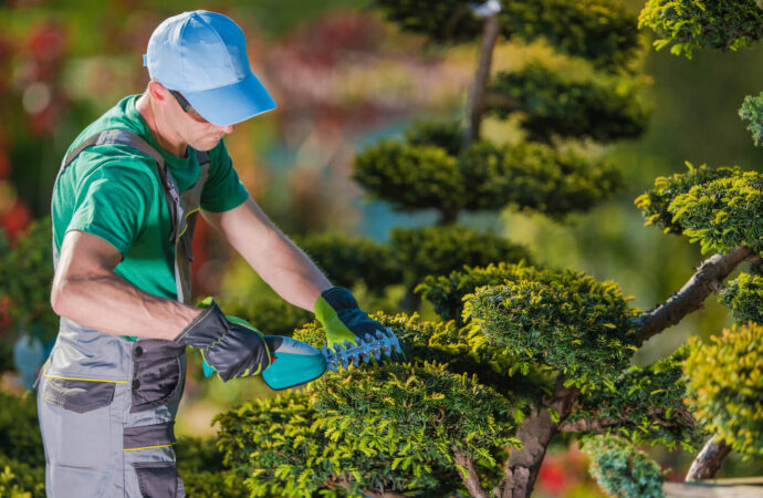 Tree Pruning-Jackson Tree Trimming and Stump Grinding Services-We Offer Tree Trimming Services, Tree Removal, Tree Pruning, Tree Cutting, Residential and Commercial Tree Trimming Services, Storm Damage, Emergency Tree Removal, Land Clearing, Tree Companies, Tree Care Service, Stump Grinding, and we're the Best Tree Trimming Company Near You Guaranteed!
