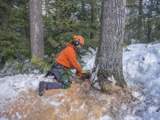 Tree Removal-Jackson Tree Trimming and Stump Grinding Services-We Offer Tree Trimming Services, Tree Removal, Tree Pruning, Tree Cutting, Residential and Commercial Tree Trimming Services, Storm Damage, Emergency Tree Removal, Land Clearing, Tree Companies, Tree Care Service, Stump Grinding, and we're the Best Tree Trimming Company Near You Guaranteed!