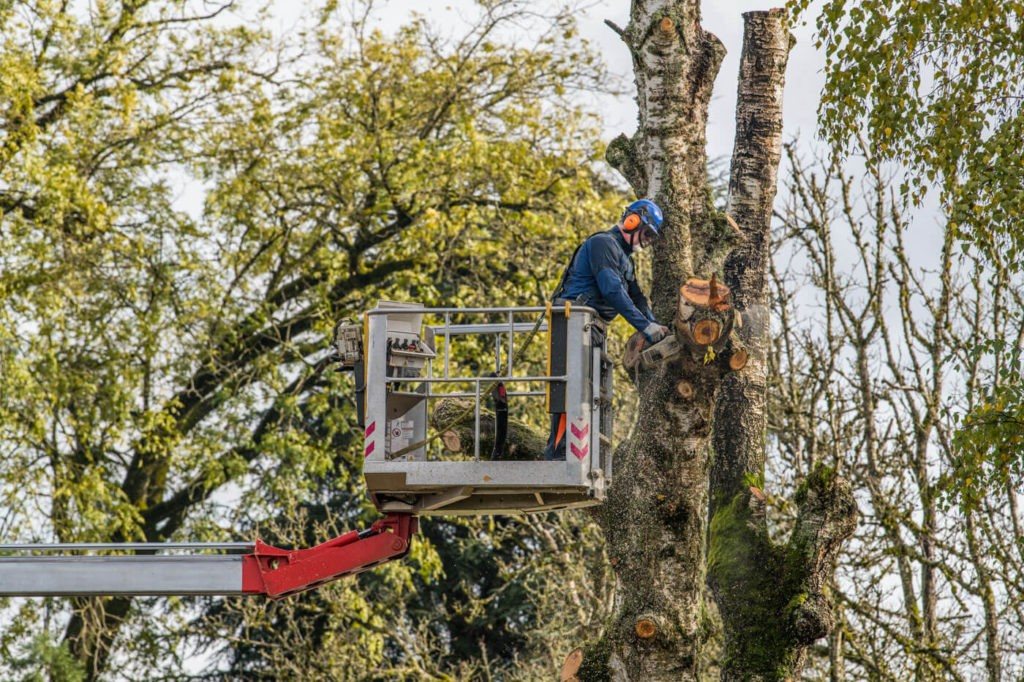 Tree Trimming-Jackson Tree Trimming and Stump Grinding Services-We Offer Tree Trimming Services, Tree Removal, Tree Pruning, Tree Cutting, Residential and Commercial Tree Trimming Services, Storm Damage, Emergency Tree Removal, Land Clearing, Tree Companies, Tree Care Service, Stump Grinding, and we're the Best Tree Trimming Company Near You Guaranteed!