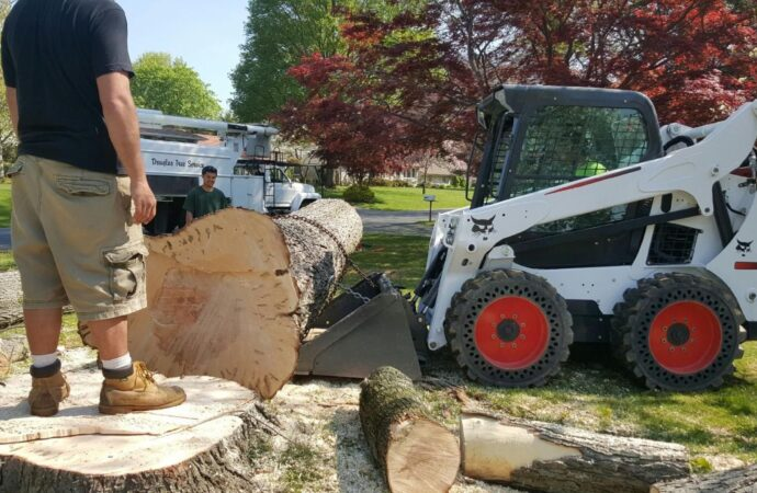 Beech Bluff-Jackson Tree Trimming and Stump Grinding Services-We Offer Tree Trimming Services, Tree Removal, Tree Pruning, Tree Cutting, Residential and Commercial Tree Trimming Services, Storm Damage, Emergency Tree Removal, Land Clearing, Tree Companies, Tree Care Service, Stump Grinding, and we're the Best Tree Trimming Company Near You Guaranteed!
