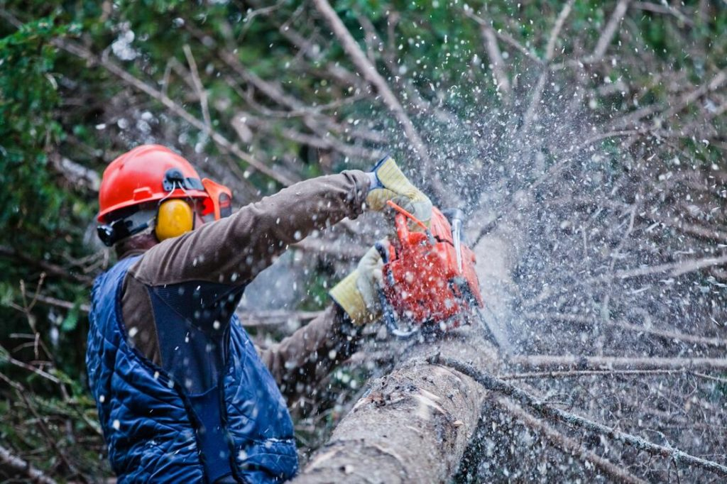 Oakfield-Jackson Tree Trimming and Stump Grinding Services-We Offer Tree Trimming Services, Tree Removal, Tree Pruning, Tree Cutting, Residential and Commercial Tree Trimming Services, Storm Damage, Emergency Tree Removal, Land Clearing, Tree Companies, Tree Care Service, Stump Grinding, and we're the Best Tree Trimming Company Near You Guaranteed!