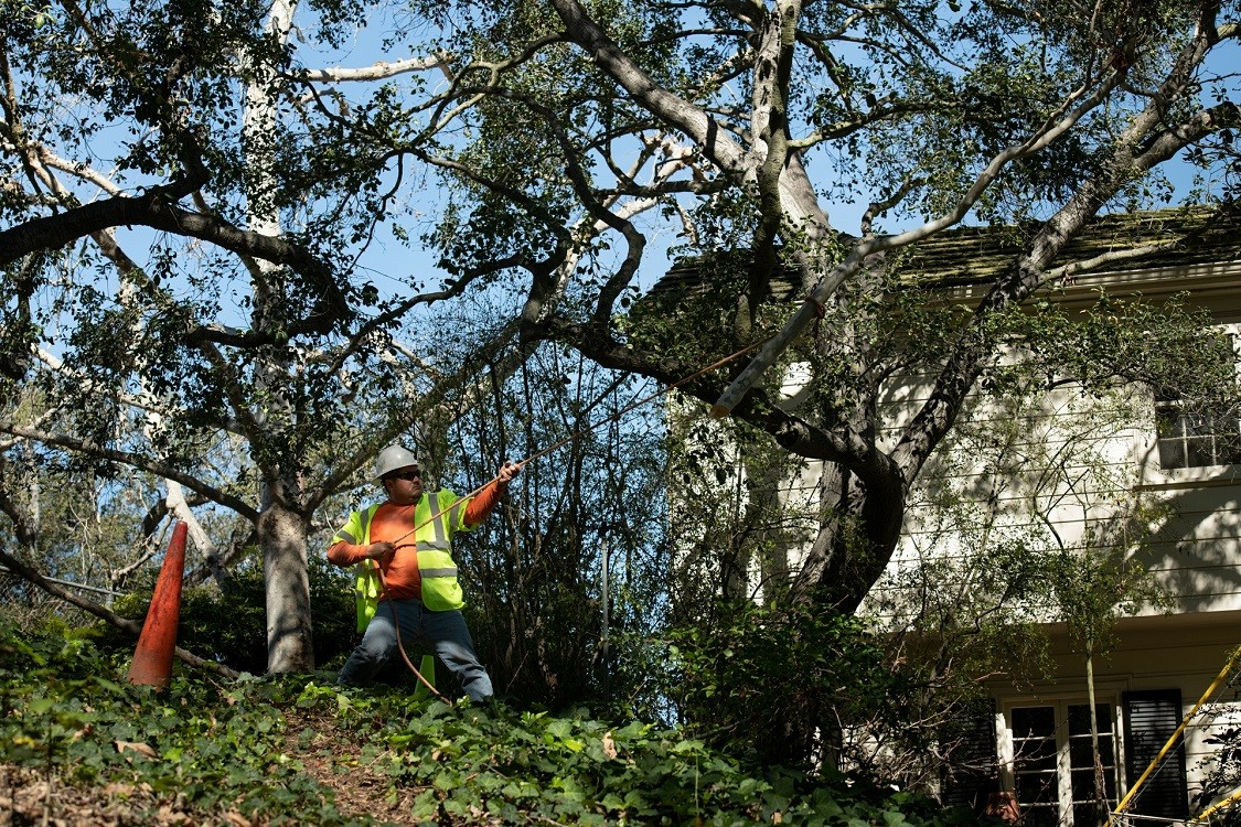 Three Way-Jackson Tree Trimming and Stump Grinding Services-We Offer Tree Trimming Services, Tree Removal, Tree Pruning, Tree Cutting, Residential and Commercial Tree Trimming Services, Storm Damage, Emergency Tree Removal, Land Clearing, Tree Companies, Tree Care Service, Stump Grinding, and we're the Best Tree Trimming Company Near You Guaranteed!